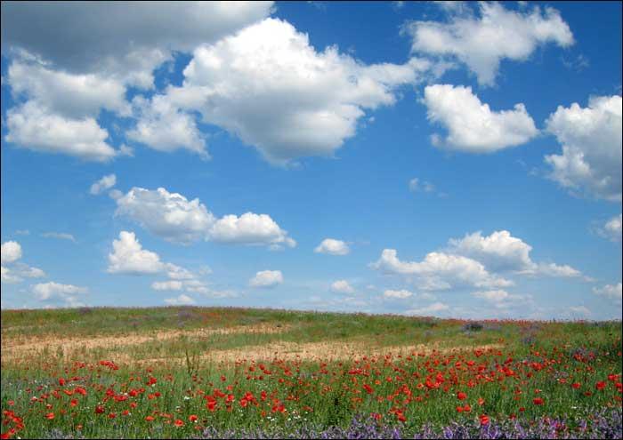 foto: niebo, ląka, kwiaty
