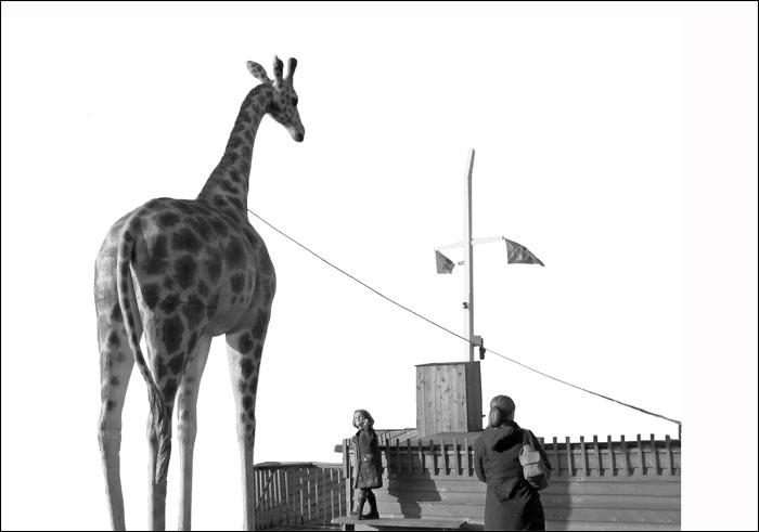 zyrafa, dziewczynka, maja, holandia