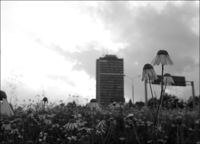 kwiatki, ogródki, górnośląska, katowice