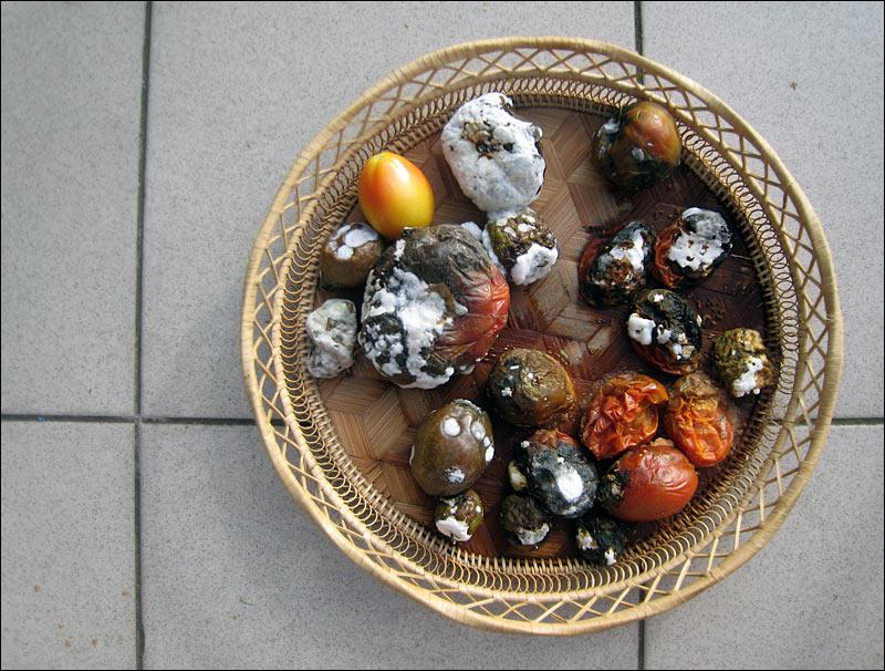 pomidor, pomidory, koszyk