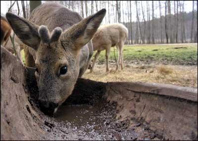 foto: jeleń, Park Dzikich Zwierząt, Kadzidłowo na Mazurach