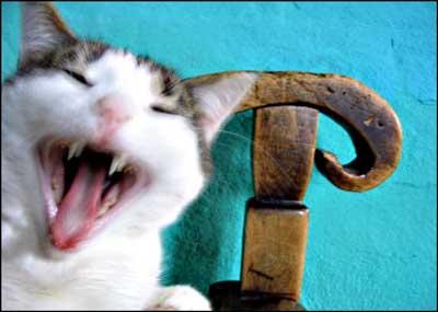 foto: kot, Oberża Pod Psem, Kadzidłowo, Mazury
