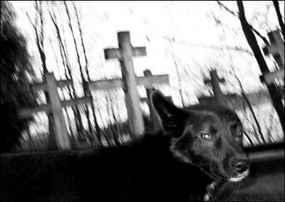 foto: pies, cmentarz, Mazury, Wojnowo