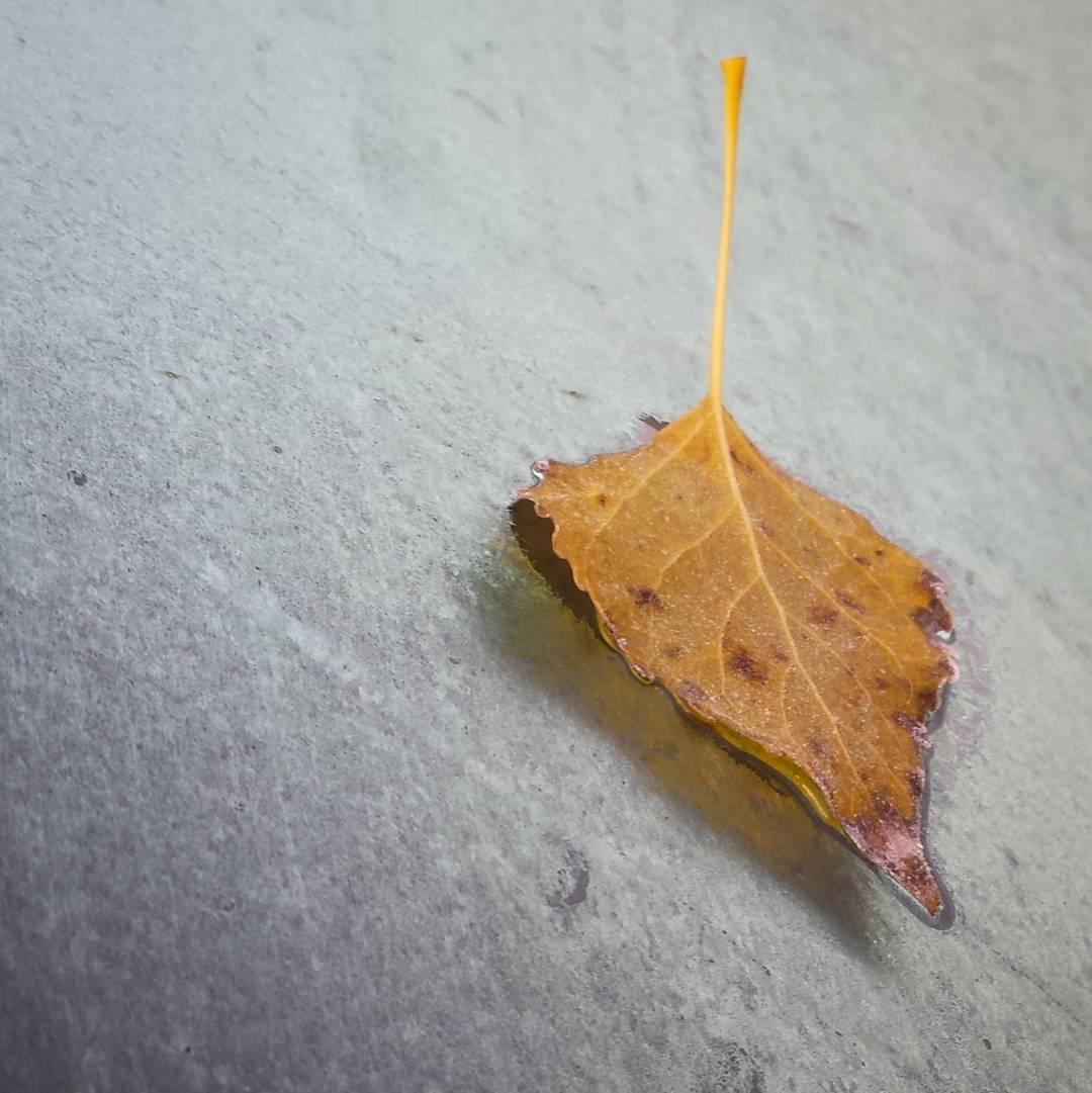 jesień, automn, liść, leave