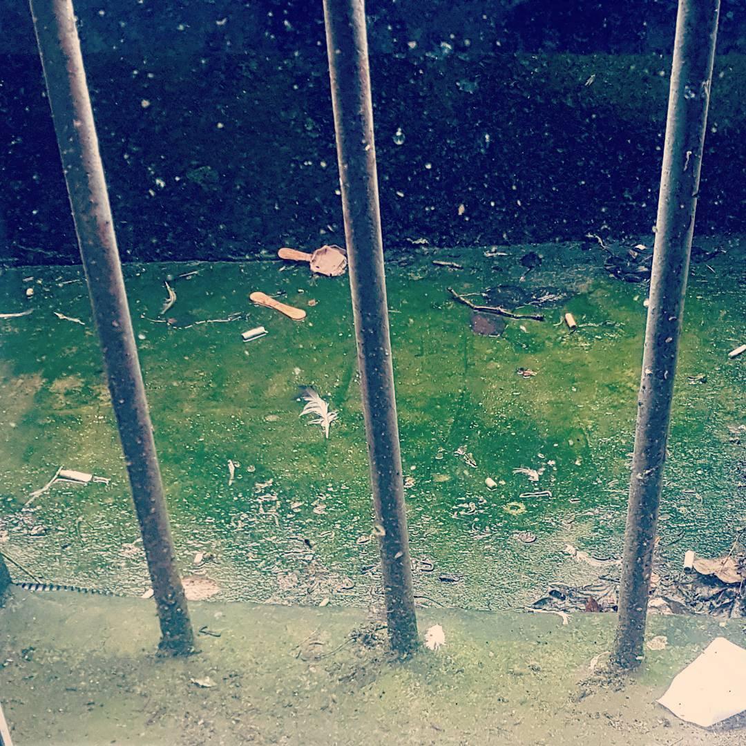 okno, kraty, zieleń, szkoła