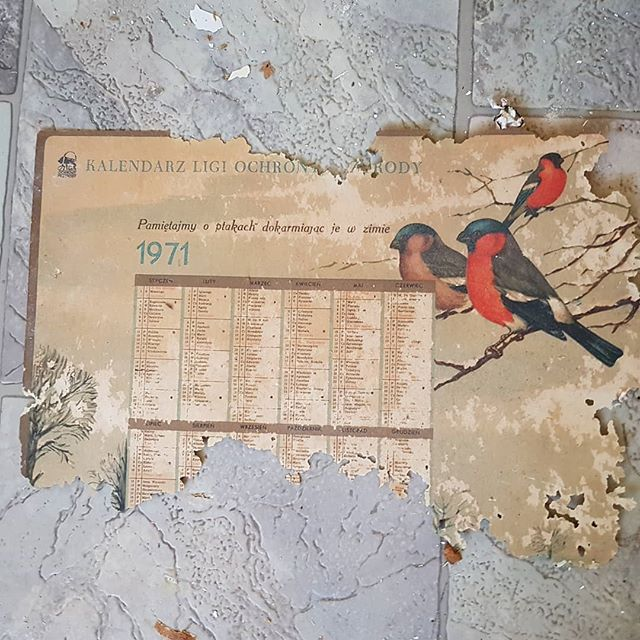 kalendarz, 1971, ptaki, kartka