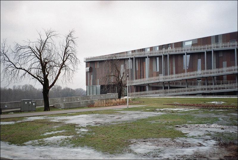warszawa powiśle, centrum kopernika, drzewo