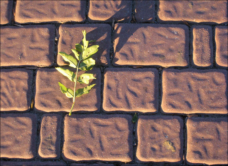 mozaika, ścieżka, gałązka w słońcu