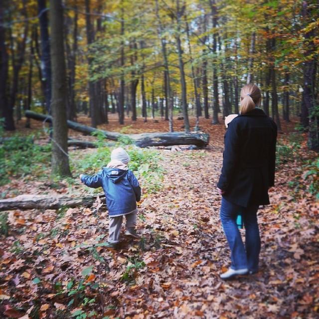 giszowiec, las, spacer, jesień