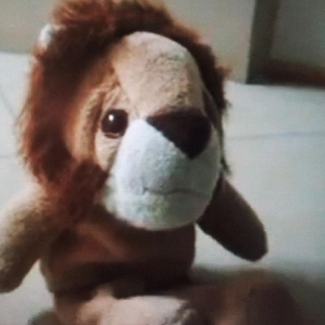 ryży lew, red lion