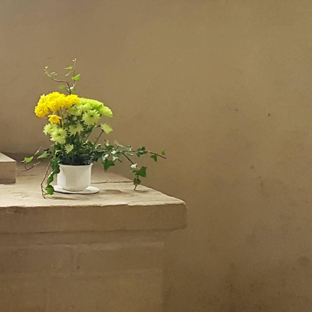magdeburg, kwiaty
